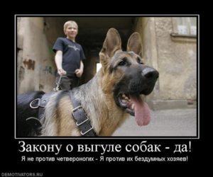 Закон о выгуле собак в московской области 2017